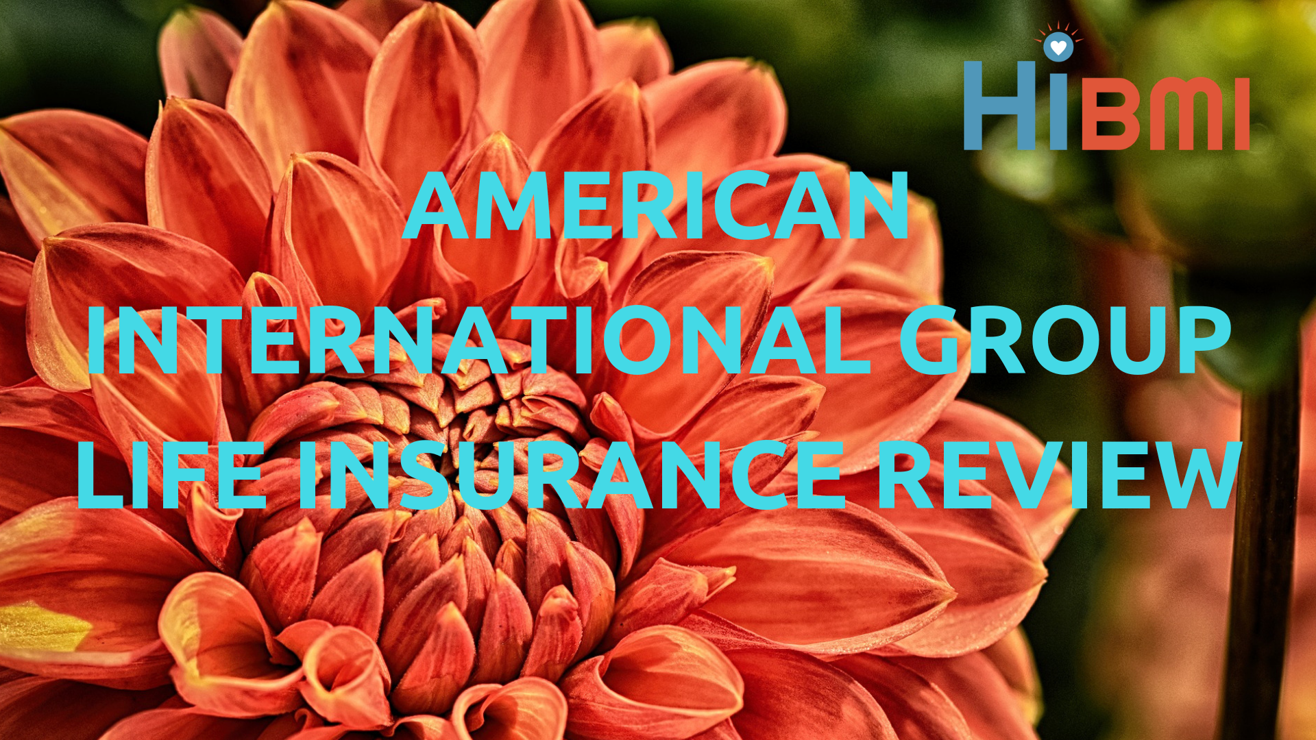 american international group life insurance review, term life insurance, universal life insurance, whole life insurance, get a FREE quote