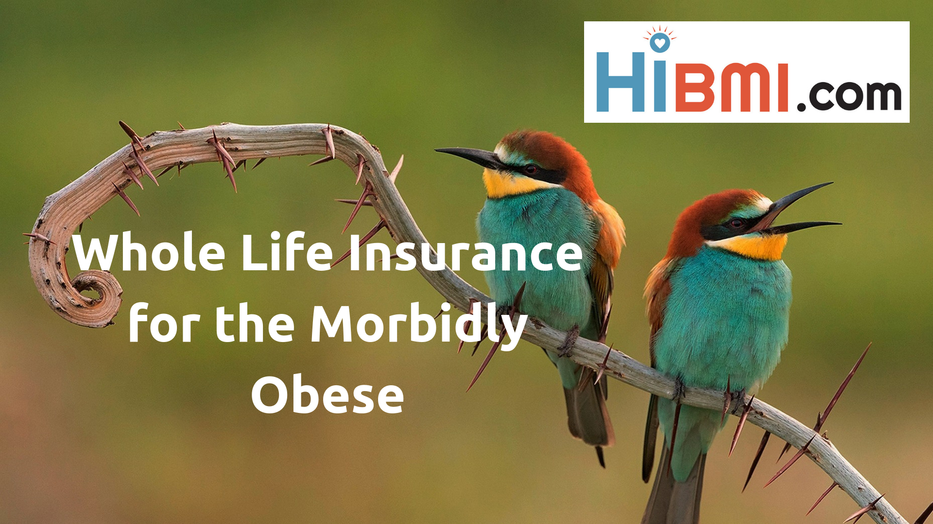 life insurance for the morbidly obese, whole life insurance for the morbidly obese